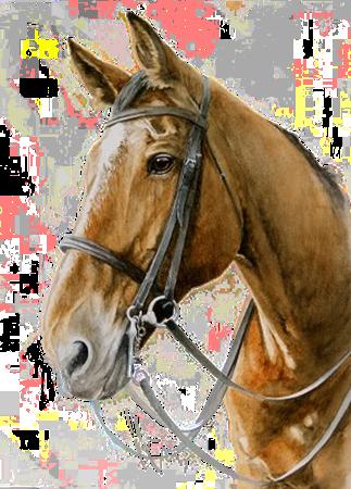 Afbeelding voor categorie Paarden
